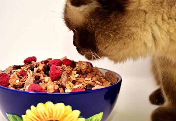 Decalogo alimentare per il gatto