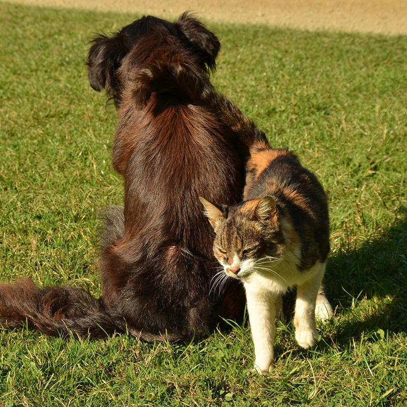 Quando cane e gatto diventano anziani